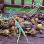 Mavis Butterfield East Coast Garden Pictures 8/23/15