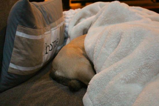 lucy snuggle puggle