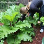 Top 5 Reasons Why Perennial Vegetables Rule!
