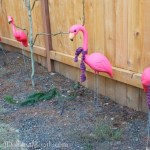 Any Knitters Out There? Pinky the Flamingo Needs Your Help