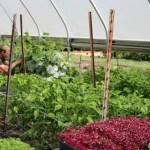 BARSKA Safes, Pruning Set, Skillet Blackberry Pie Recipe and More