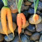 """Walmart to Sell """"Ugly"""" Produce"""