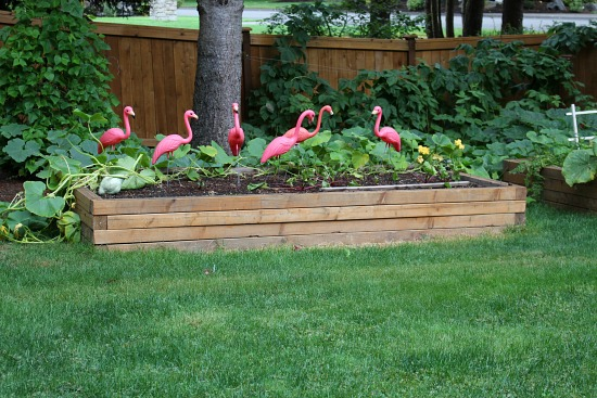 garden-box