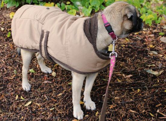 ll-bean-field-jacket-dog-coat