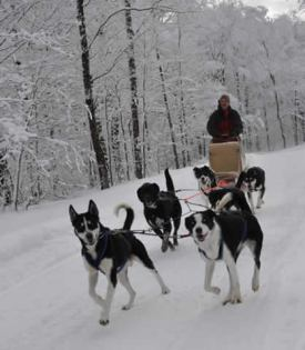Vermont B&amp;B dogsled advednture package