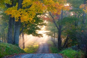 Country road with sunlight streaming through the trees
