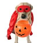 Don't panic!  Last minute Halloween costumes