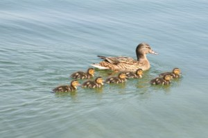 """Enjoy the day with all your """"babies"""" gathered around"""