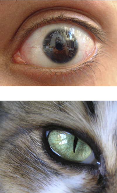Drawing Realistic Cat Eyes - OnlyPencil Drawing Tutorials