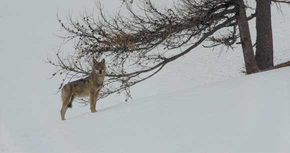 La-vallée-des-loups2