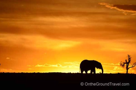 Maasai Mara at Sunset with Elephants on the horizon.