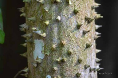 Spikes on Tree Roots in the Amazon jungle from trips around the world.