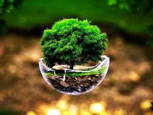 Groe-Tree-On-Earth-Day-askideascom
