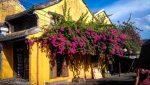 wall flowers hoi an vietnam