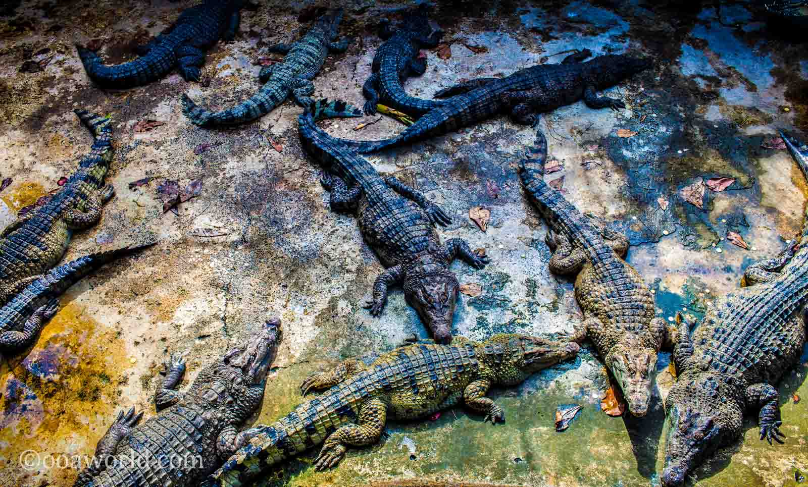 Crocodile Farm Puerto Princesa Palawan