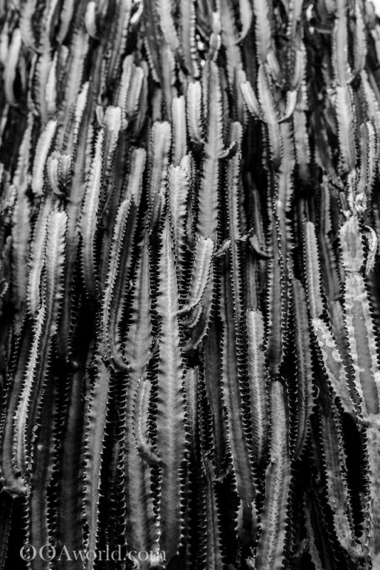 Prickly Pyramids Abstract Texture Photography Photo Ooaworld