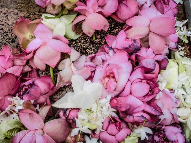 Lotus Flowers Anuradhapura Sri Lanka ooaworld Rolling Coconut Photo Ooaworld