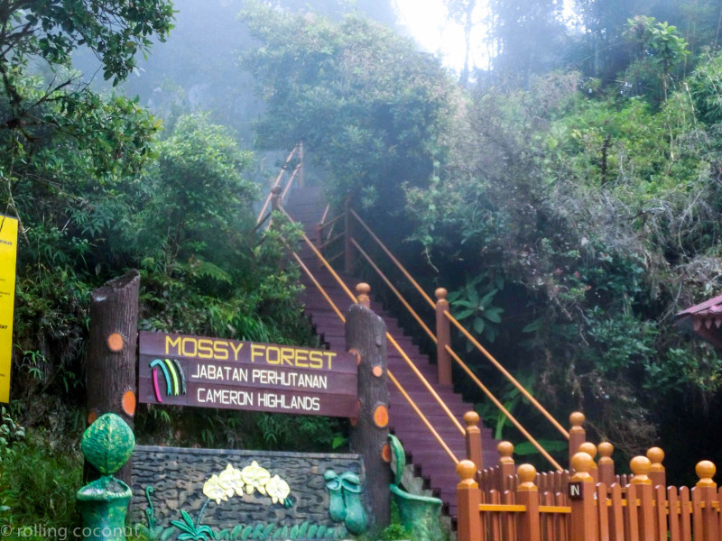 Entrance Mossy Forest Cameron Highlands Malaysia photo ooaworld Rolling Coconut