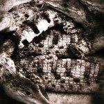 Crocodiles Instagram photo ooaworld