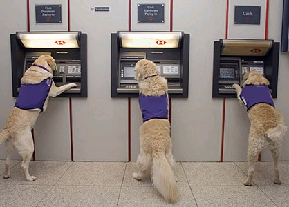 atm dog photo ooaworld Rolling Coconut