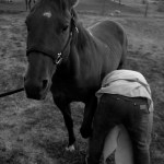 Buffalo, hoofing a horse, Wyoming