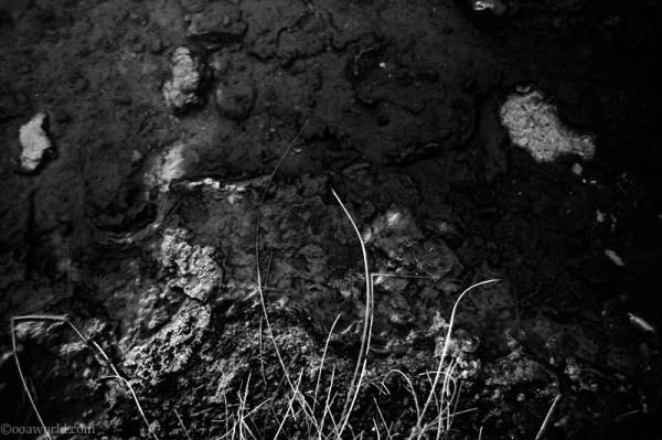 Texture, Yellowstone Park, Algae
