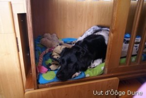 Nurja ligt graag in de camper