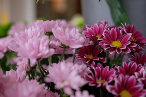 oopsadaisy-florist-beauly-9