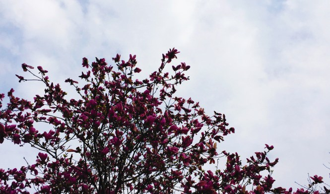 cloudy-sky-with-flowers