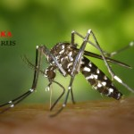 Zika Vírus - Aedes Aegypti
