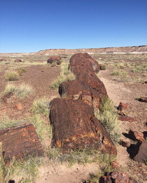Petrified trees