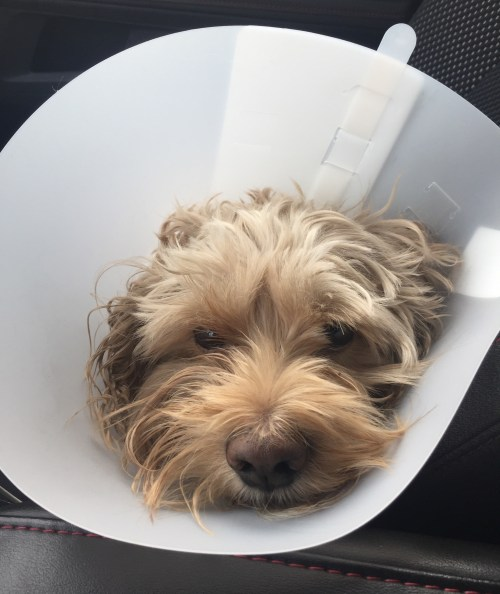 Beesly in cone