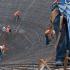 Foto: ICA. Las nuevas instalaciones, ubicadas en la mina de Peñasquito, incrementarán la productividad del complejo de Goldcorp.
