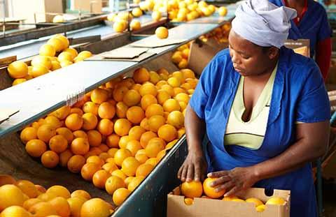 Arance del Sudafrica. Sarà tolto il dazio
