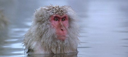 """Gary Busey stars in """"Baraka."""" Sorry, my mistake, that's actually a Japanese snow monkey."""