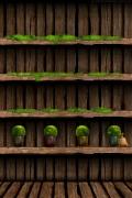 libreria-legno-piante