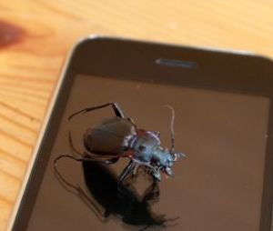 Bug iPhone