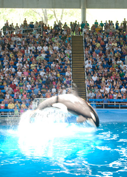 Sea world tips for parents