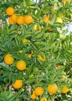 La Naranja Orgánica