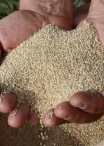 Quinoa Orgánica Pelada