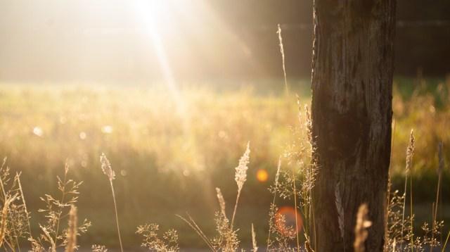 sun-trees