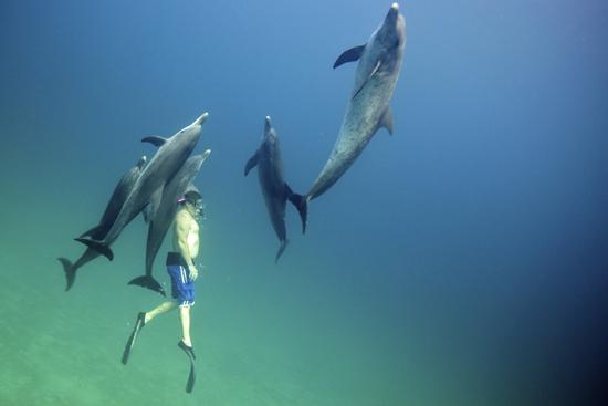 080-wildquest-dolphins