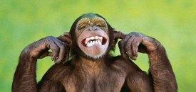 Slaying my monkey mind