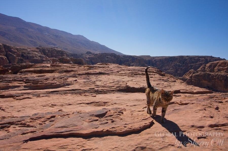 High Place of Sacrifice Petra Cat