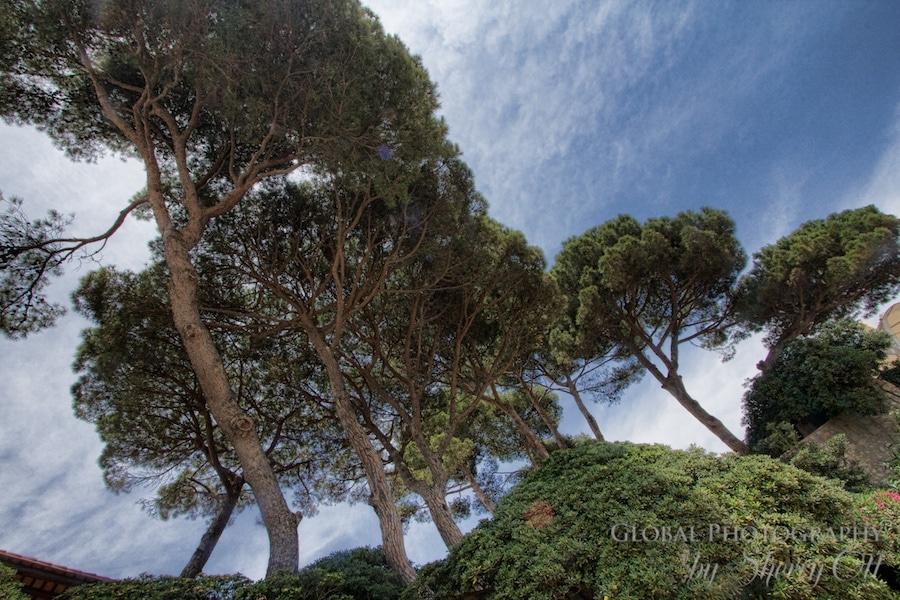 costa brava trees