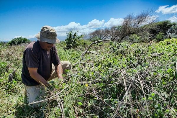 Volunteer Maui