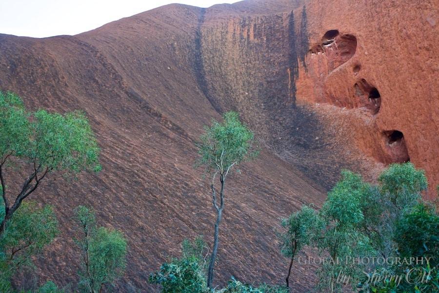 Uluru trees