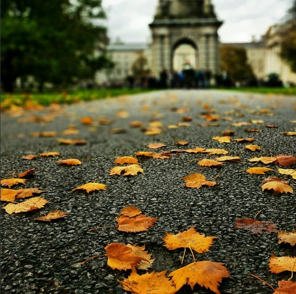 Trinity College Autumn Leaves