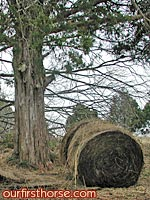 Round bale by the tree
