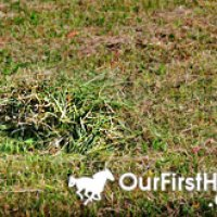 Do not feed grass clippings to horses